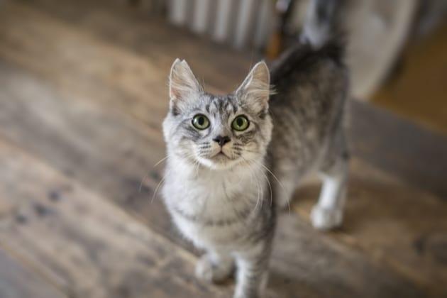 保護猫の譲渡会をチェック