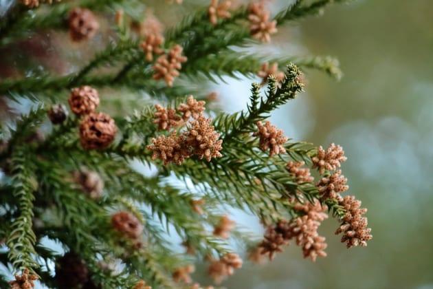 春の花粉は肌にも悪影響を与える