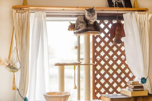 保護猫シェルターについて