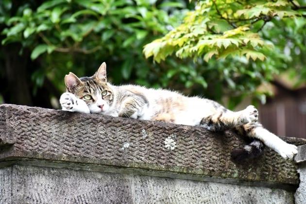 保護猫活動とは?シェルターや飼いたい場合の譲渡会についてのサムネイル