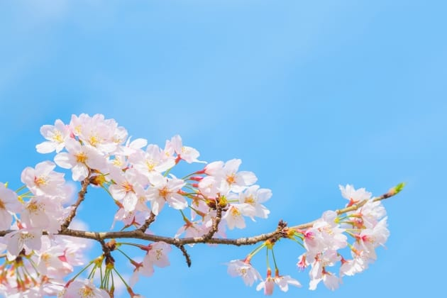 春の乾燥肌の原因
