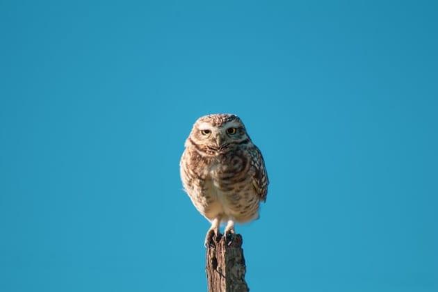 フクロウの飼育で後悔することはある?