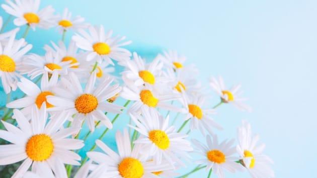 お花摘みと呼ぶようになった由来や理由について