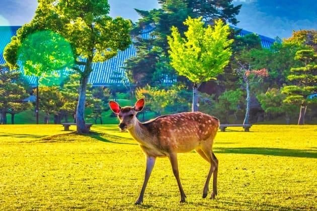 奈良で泊まりたい女子旅ホテル10選!古都を満喫しつくそう